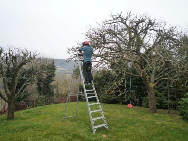 Садовая обрезка деревьев